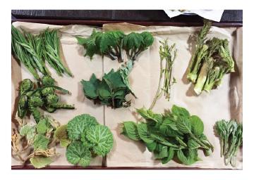 妻有の初夏の山菜と物産市 芸術祭を満喫する宿泊予約キャンペーン
