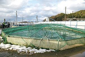 養殖用水槽