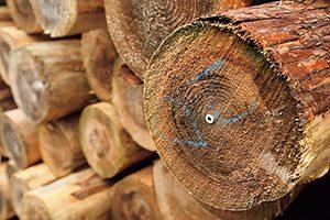 OHTAGを打ち込んだ越後杉の丸太