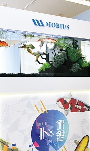 新潟本社にある錦鯉の水槽